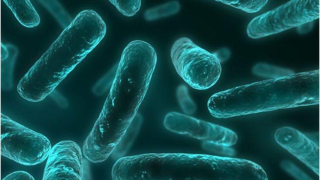 অ্যান্টিবায়োটিক প্রতিরোধী ব্যাকটেরিয়ার কারণে আইসিইউ-তে ৯০০ রোগীর ৪০০ জন মারা যায়